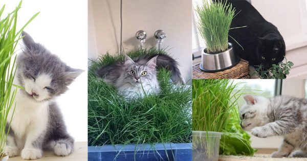 Explore Diy Indoor Cat Garden For Cat Loversbalcony Garden Web Medium