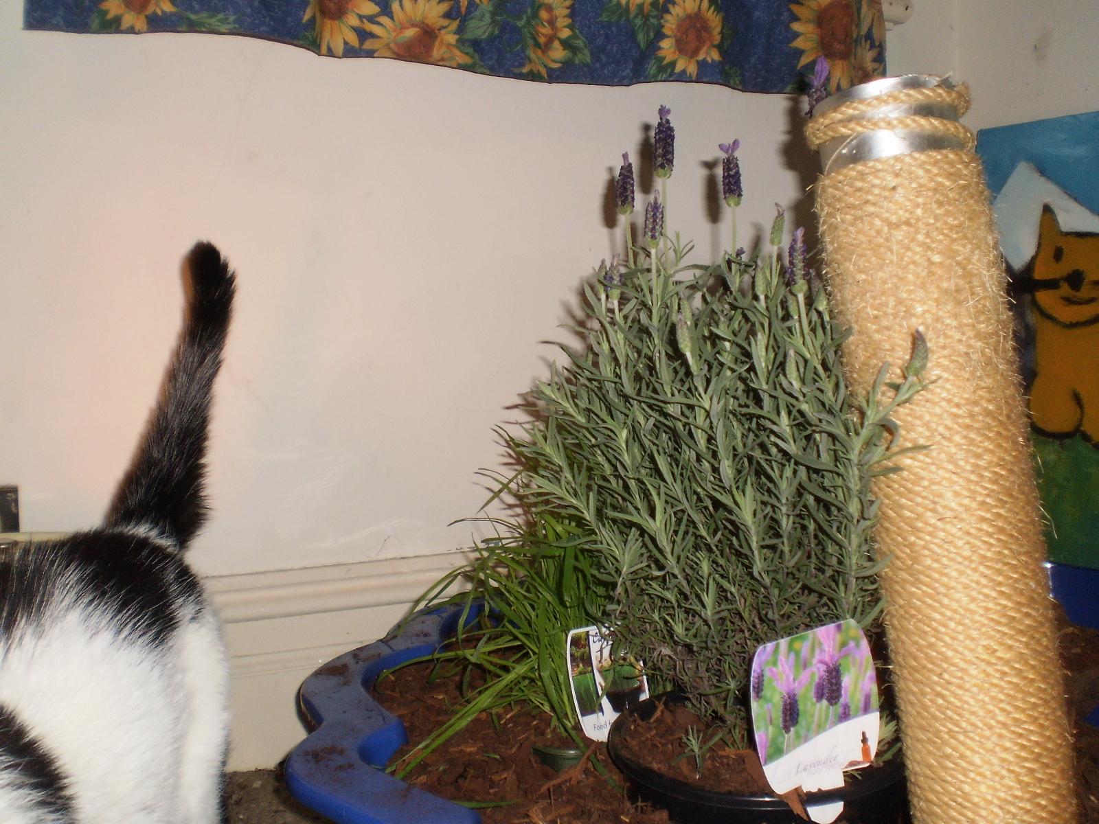 fresh indoor cat garden for rumpierumpiesbitsandpieces