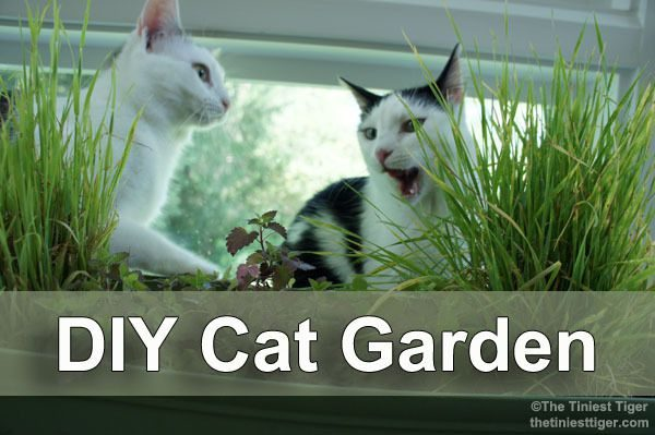 Get Bring The Outdoors To Your Indoor Cats With A Diy Cat Garden Medium