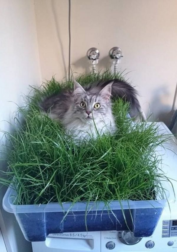 Get Diy Indoor Cat Garden For Cat Loversbalcony Garden Web