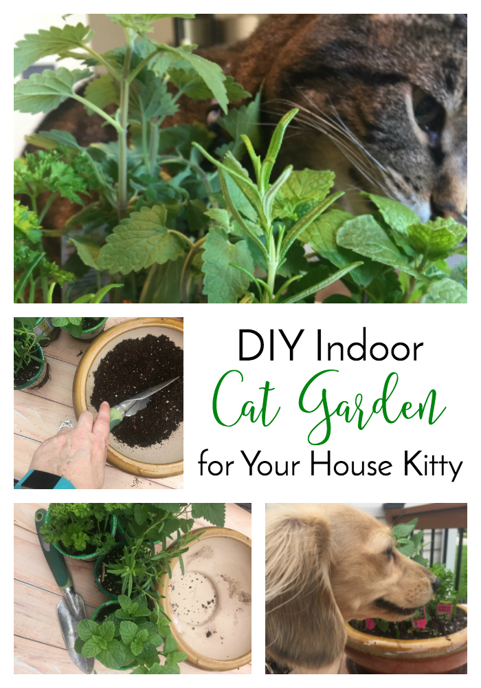 innovative  diy indoor cat garden for your house kittythe lazy pit