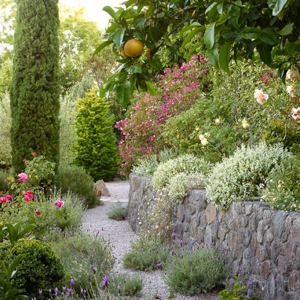 Innovative Mediterraneanclimate Gardening Sunset Sunset Magazine Medium