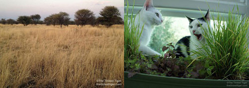 inspiration 3 steps to an indoor cat garden petcha