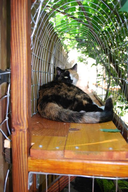 Inspiration Outdoor Catwalk Cat Enclosure So Indoor Kitties Can Enjoy Medium