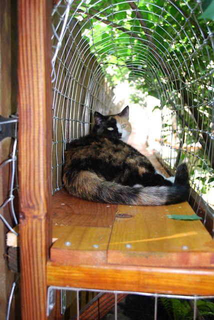inspiration outdoor catwalk cat enclosure so indoor kitties can enjoy