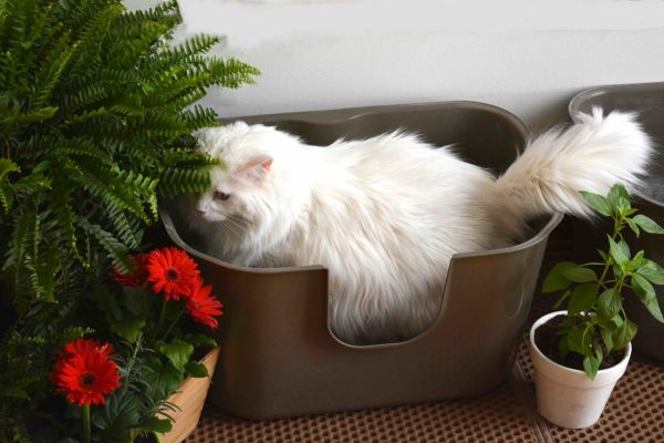 Inspirational Diy Indoor Litter Cat Garden Sanctuary The Catnip Times Medium