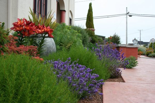 Inspirational Mediterranean Garden Design How To Create A Tuscan Garden Medium