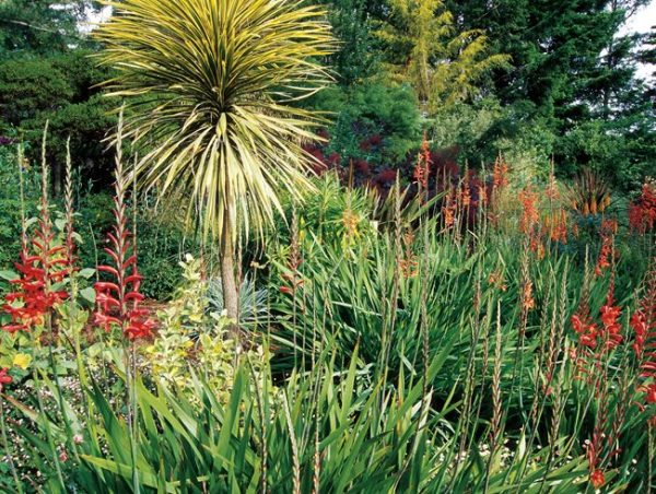 Looking Mediterranean Plants To Grow In Your Gardengarden Design Medium