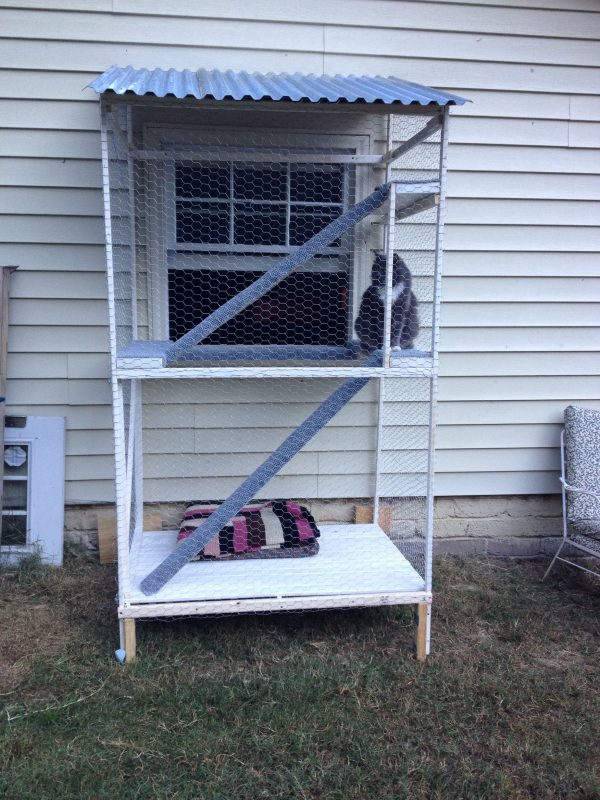 Popular Our Catio A Safe Outdoor Inclosure For Indoor Catsmy Medium