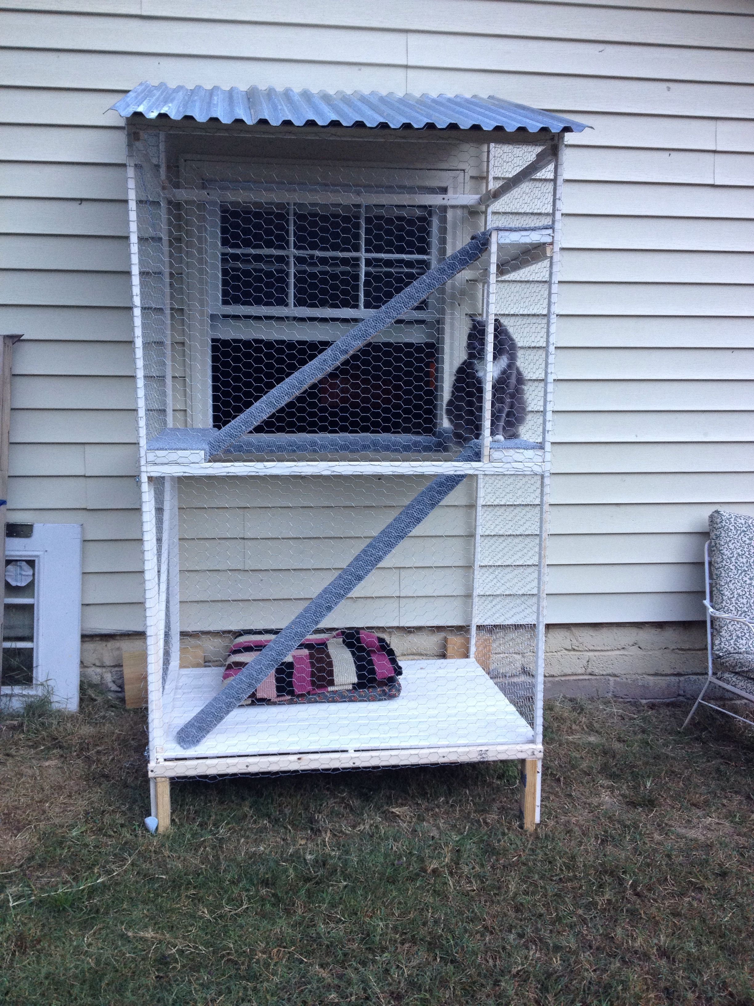 popular our catio a safe outdoor inclosure for indoor catsmy