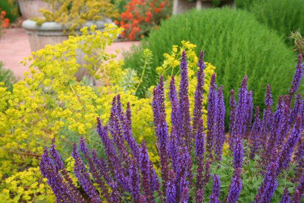 Simply Mediterranean Garden Design How To Create A Tuscan Garden Medium