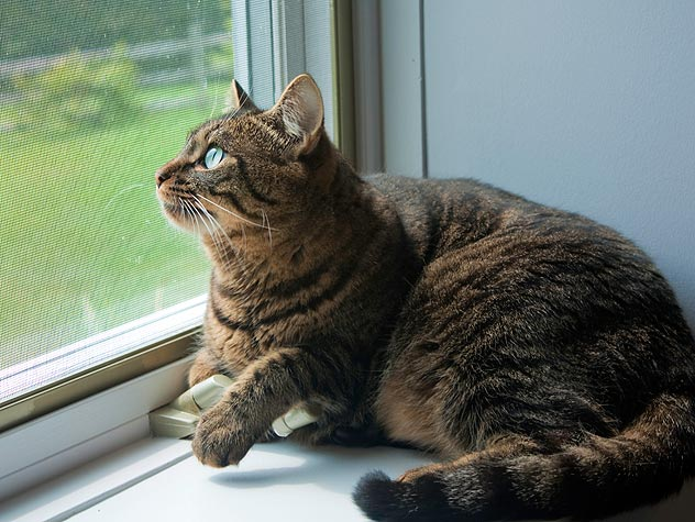 simply the foolproof guide to turning your outdoor cat into an
