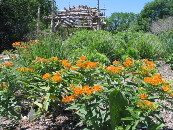 Best How To Design A Native Plant Garden Dyck Arboretum Medium