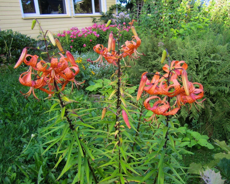 clever commonsphoto challenge 2016 october gardening voting