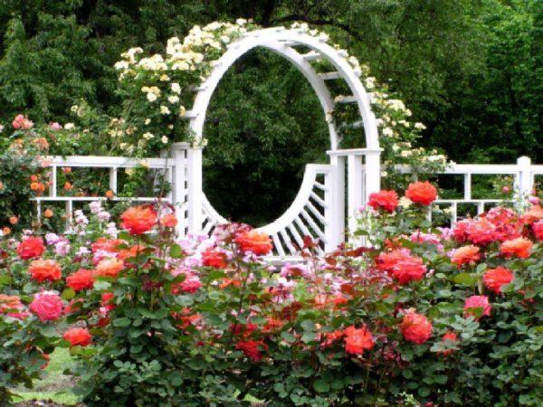 Clever Rose Garden Wallpapers Wallpaper Cave Medium