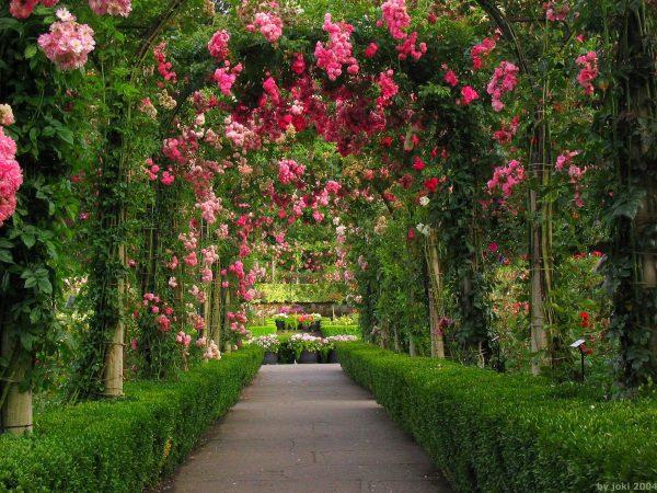 Collection Rose Garden Wallpapers Wallpaper Cave Medium