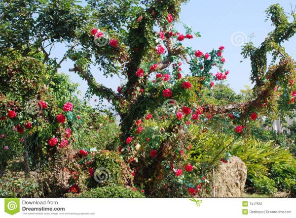 Example Of A Flourish Garden Stock Photos Image 7417553 Medium