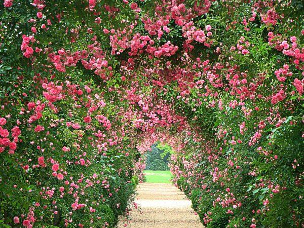 Example Of A Rose Garden Wallpaper Wallpapersafari Medium