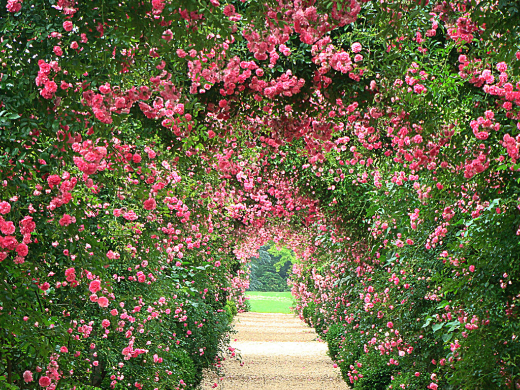 example of a rose garden wallpaper wallpapersafari