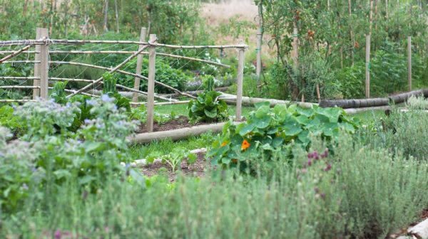 Example Of A The Flourishing Vegetable Garden At The Table At De Meye Medium
