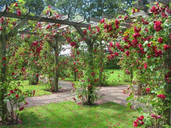 Explore Rose Garden Wallpapers Wallpaper Cave Medium