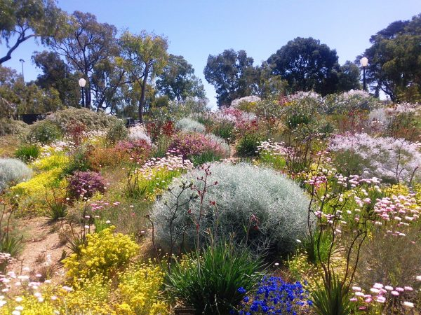 Fresh Australian Native Plants For Rock Gardens That Can Survive Medium