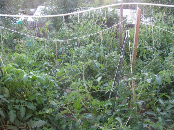 Fresh The Kitchen Witches Garden Medium