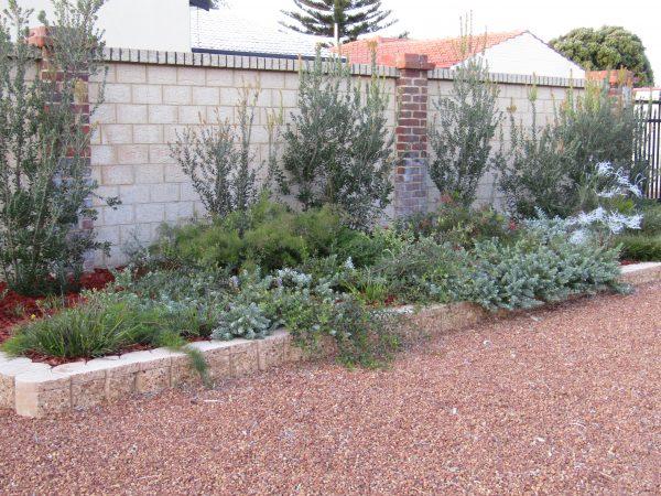 Innovative Australian Native Gardens Australian Native Nursery Medium