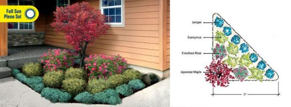 Innovative Evergreen Shrub For Corner Of Houselandscape Garden Medium