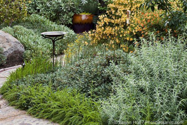 Innovative Gardening With Native Plants Medium