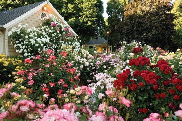 Inspirational How To Grow A Modernday Cottage Garden Medium