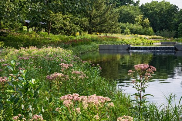 Inspirational Required Reading The New York Botanical Garden Gardenista Medium