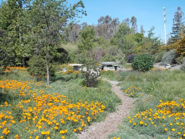 Inspirational Why Should We Plant Natives The Granada Native Garden Medium
