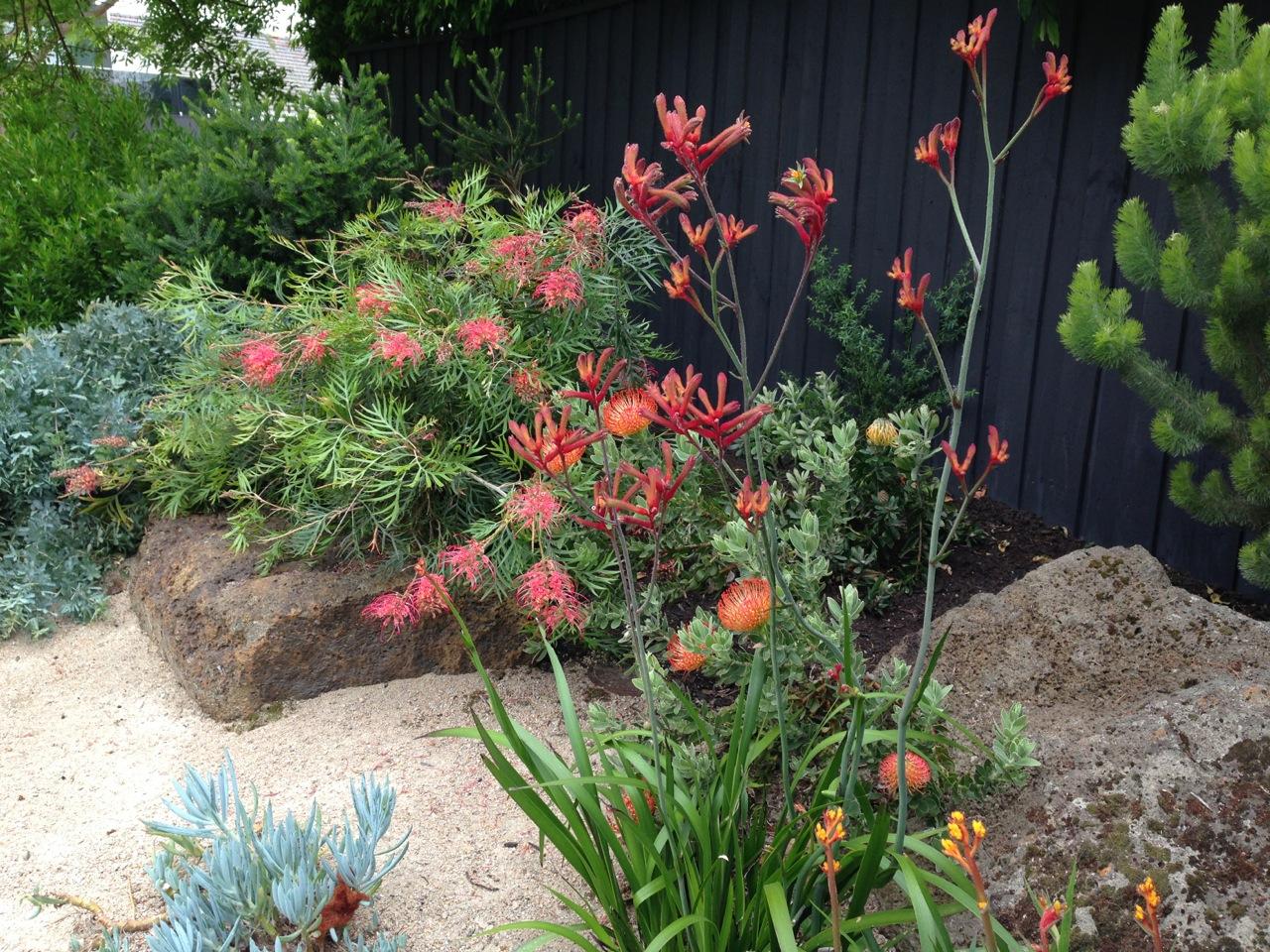 looking the best garden designer in australia janna schreier  40  native garden for your inspiration
