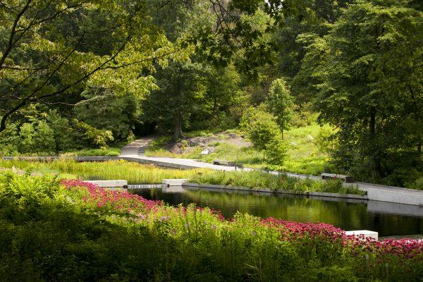 Perfect Science Talk Native Plant Gardennybg Medium