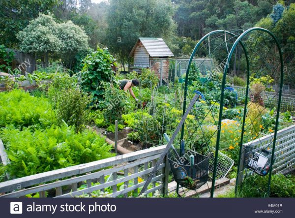 Simply A Flourishing Summer Vegetable Garden With Hen House And Medium