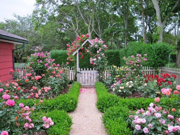 Style Cottage Garden Design With Roses  Wilson Rose Garden Medium