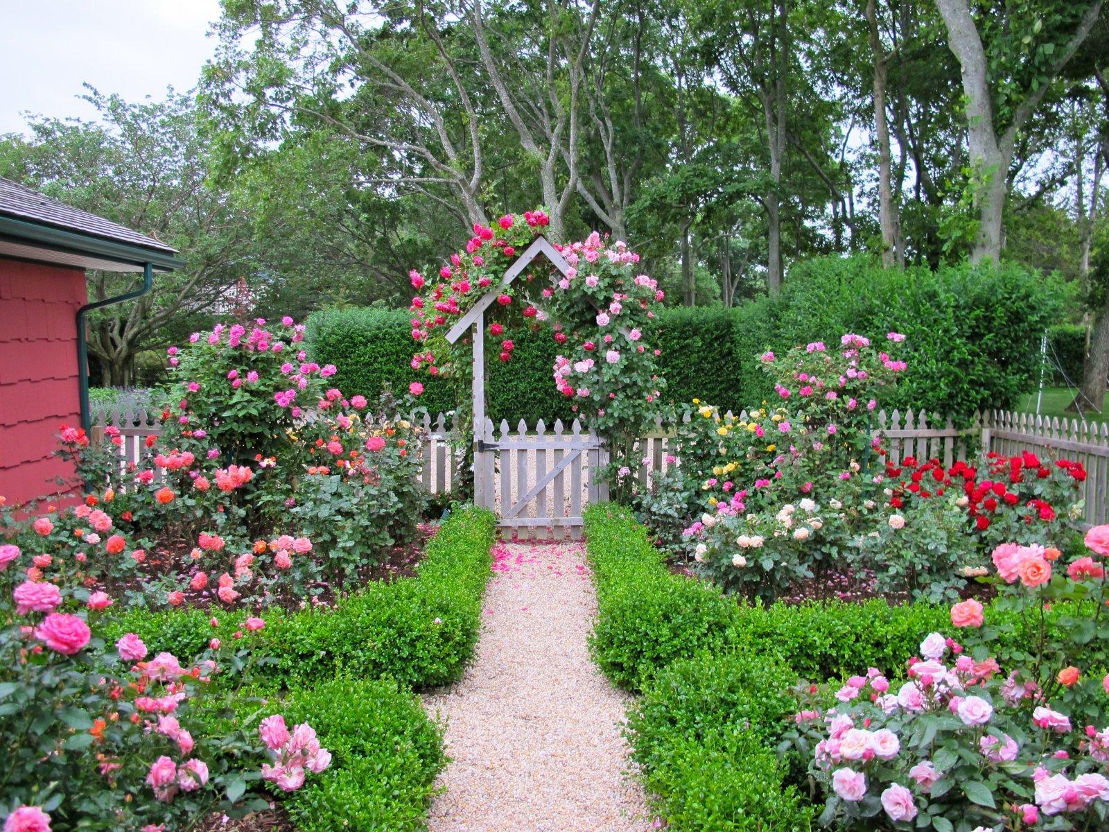style cottage garden design with roses  wilson rose garden