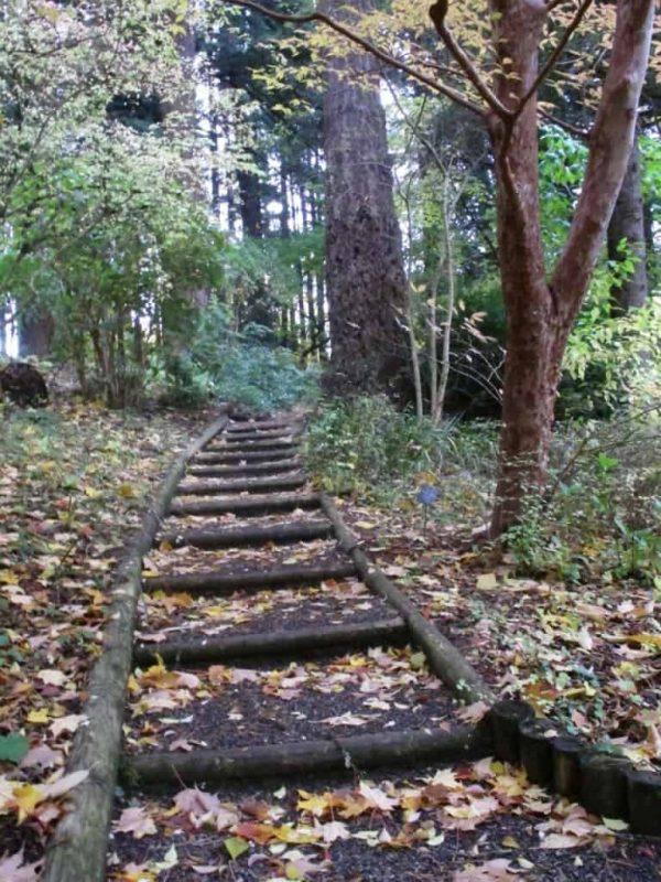 Style Peaceful Places In Portland Leach Botanical Garden Medium