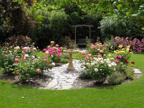 Tips Back Yard Rose Gardensfor My Backyard Medium