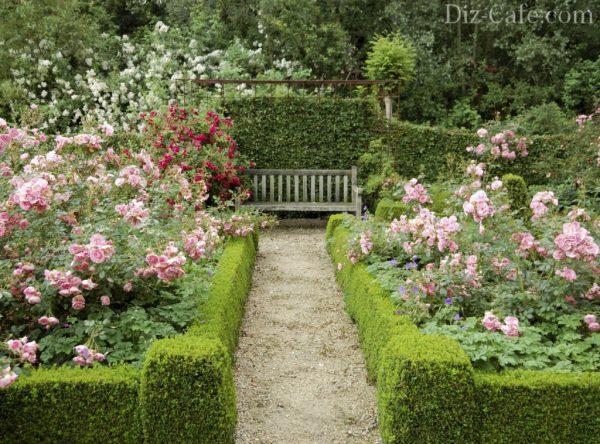 Tips Landscaping Design With Roses  Wilson Rose Garden Medium