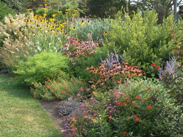 Tips The Garden Plot For The Love Of Birds In Your Backyard Medium