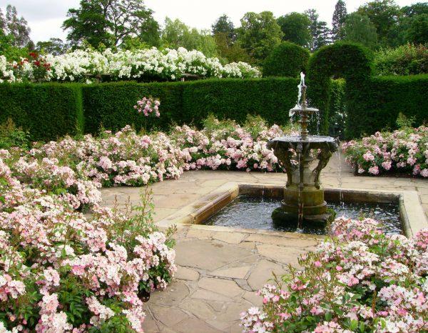 Tips Victorian Garden Design Ludwigs Rosesludwigs Roses Medium