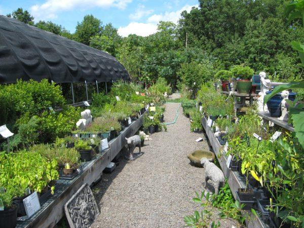 We Share Witches Herb Garden Garden Ftempo Medium